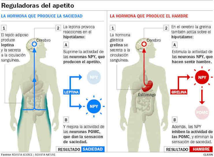 Las hormonas del hambre y su relación con la cirugía bariátrica