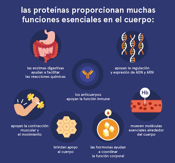 como funionan las proteinas